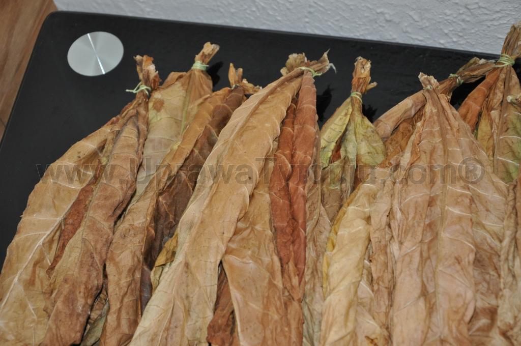 fermentacja tytoniu 2